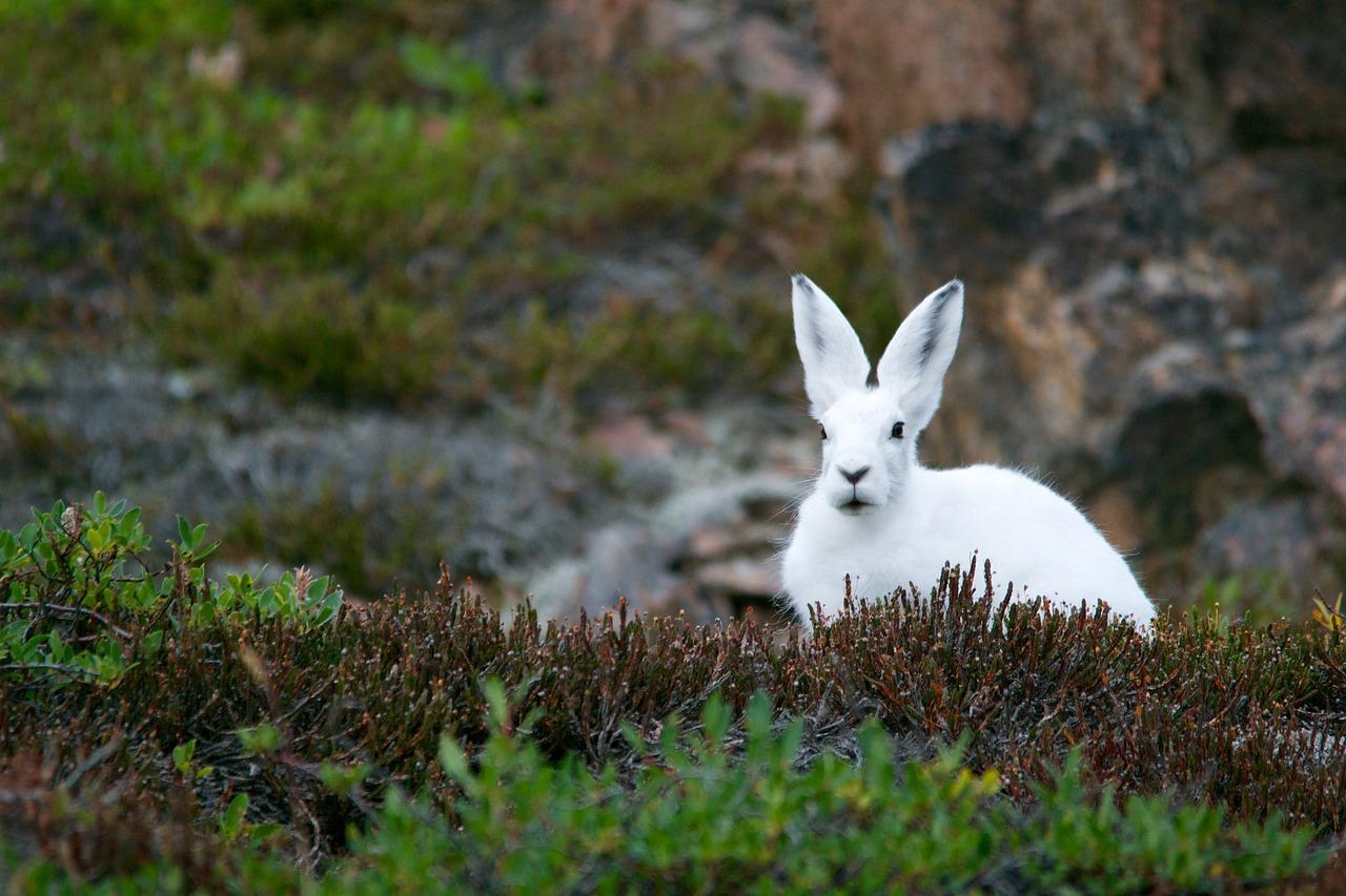 ベラジョンカジノにwhite rabbit(ホワイトラビット)はある?